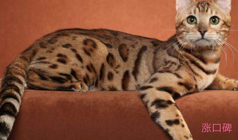 世界上最贵的宠物 高达793万元